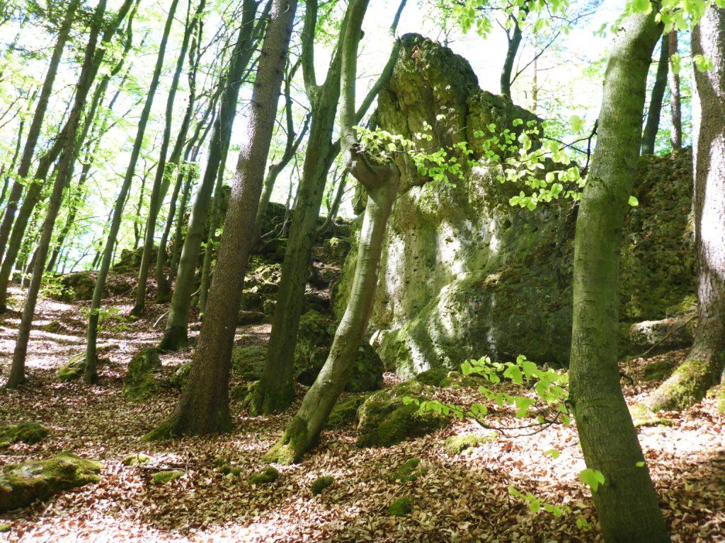 Kalk-Felsen in der Fränkischen Schweiz